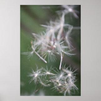 Clustered Dandelion Angels Poster