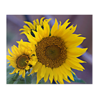 Clustered Sunflowers Close-Up Photograph Acrylic Wall Art