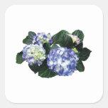 Clusters of Purple Hydrangea