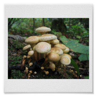 Clutter of Mushrooms Poster