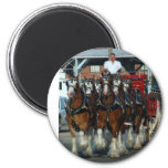 Clydesdale 6 horse hitch