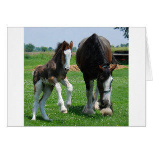 clydesdale and filly