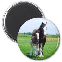 Clydesdale and Filly magnet