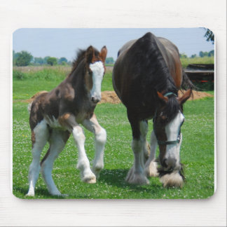 clydesdale and filly mousepads