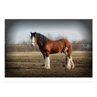 clydesdale black border postcard