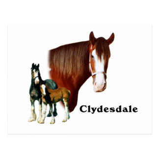 Clydesdale design postcard