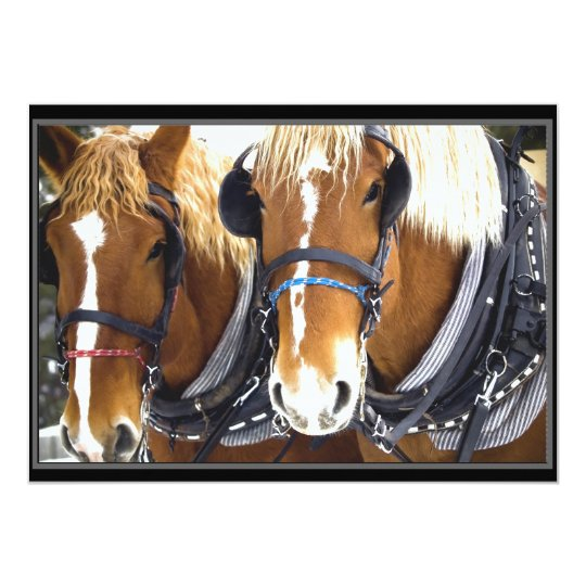 Clydesdale Draught   Horse Invitation
