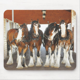 Clydesdale Draught   Horses in the Barn Mouse Mat
