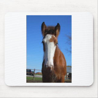 Clydesdale filly mouse pads