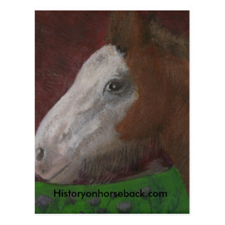 Clydesdale foal Mother s Side Post Cards