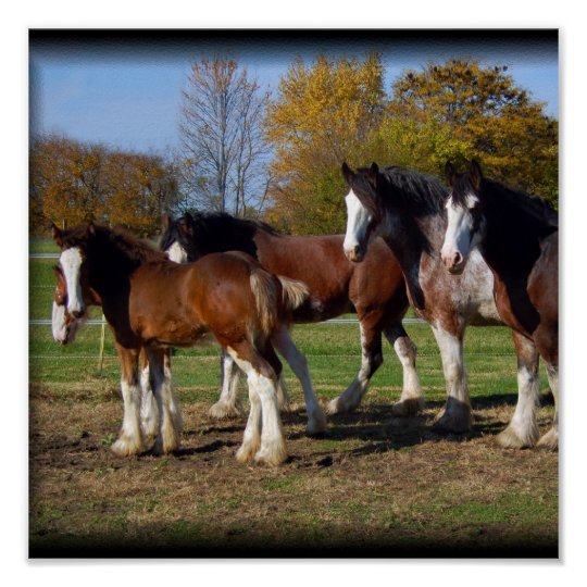 clydesdale group print