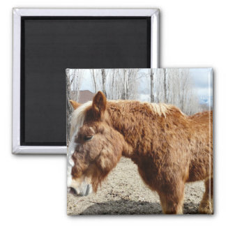 Clydesdale horse 2 square magnet
