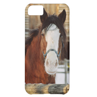 Clydesdale horse iPhone 5C case