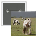 Clydesdale horses in a field, Northumberland, 15 Cm Square Badge