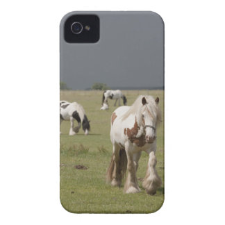Clydesdale horses in a field, Northumberland, Case-Mate iPhone 4 Case