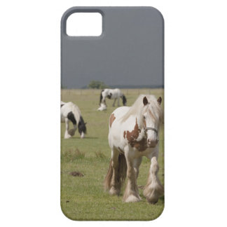 Clydesdale horses in a field, Northumberland, iPhone 5 Covers