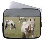 Clydesdale horses in a field, Northumberland, Laptop Computer Sleeves