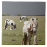 Clydesdale horses in a field, Northumberland, Large Square Tile