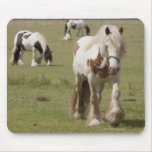 Clydesdale horses in a field, Northumberland, Mouse Pad