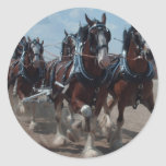 Clydesdale Horses Round Sticker