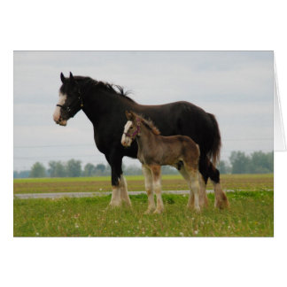 clydesdale mare and filly greeting card