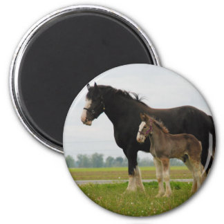 clydesdale mare and filly magnet