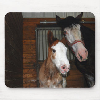 Clydesdale mare and filly mouse pads