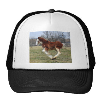 Clydesdale stud colt running mesh hat