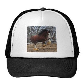 Clydesdale stud colt running trucker hats