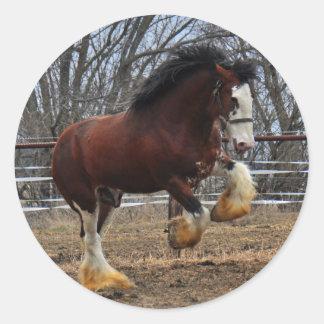 Clydesdale stud colt running round sticker