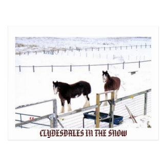 CLYDESDALES IN THE SNOW POSTCARD