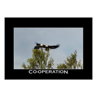 CO-OPERATION Bald Eagles Photo Poster