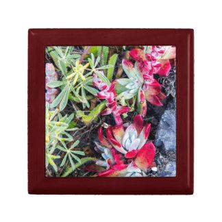 Coast Dudleya At Point Reyes National Seashore Small Square Gift Box