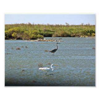 Coastal Birds Photo