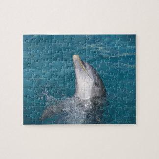 Coastal Bottlenose Dolphin Jigsaw Puzzle