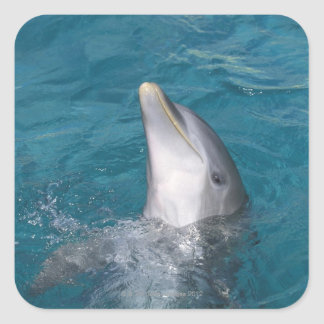 Coastal Bottlenose Dolphin Square Sticker