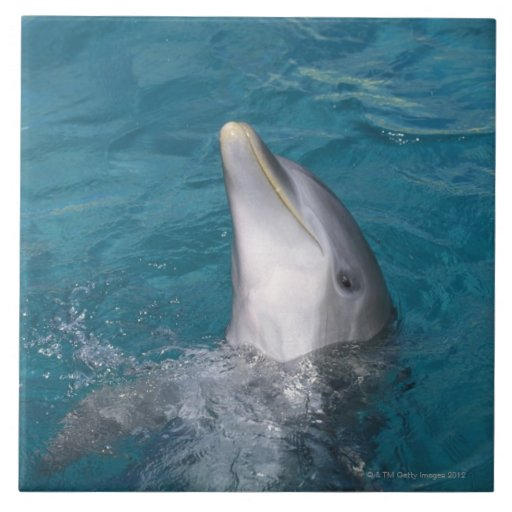 Coastal Bottlenose Dolphin Ceramic Tile