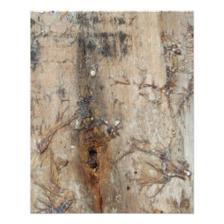Coastal Driftwood Picture Personalized Flyer