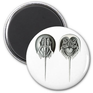 Coastal Horseshoe Crab Magnet