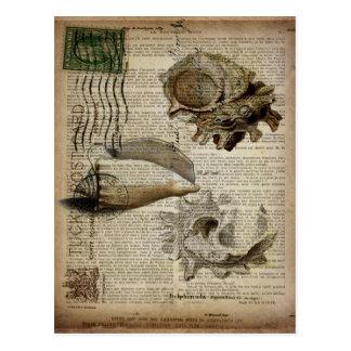 coastal modern vintage french botanical seashell postcard