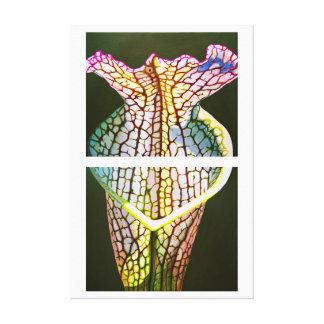 Coastal Pitcher Plant Canvas Print