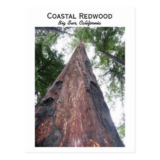 Coastal Redwood - Big Sur, California Postcard