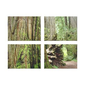 Coastal Redwood Trees Canvas Prints Forests