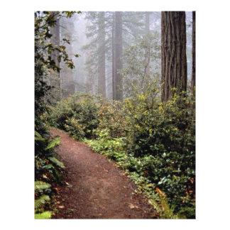 Coastal redwoods Lady Bird Johnson Grove Califor Personalized Flyer