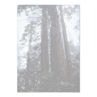 Coastal Redwoods, Lady Bird Johnson Grove, Califor Custom Invites