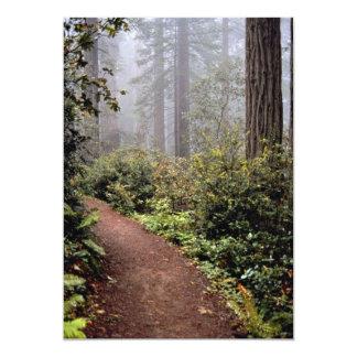 Coastal redwoods, Lady Bird Johnson Grove, Califor Invitations