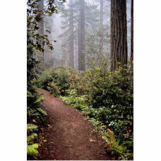 Coastal redwoods, Lady Bird Johnson Grove, Califor Photo Cut Outs