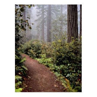 Coastal redwoods, Lady Bird Johnson Grove, Califor Postcard