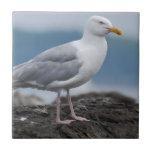 Coastal Seagull Tile