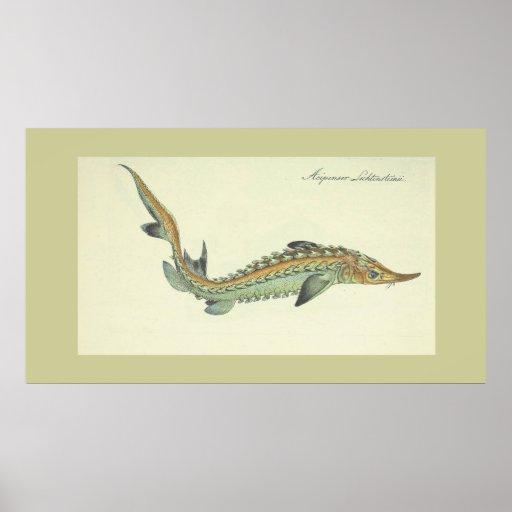Coastal - vintage fish print